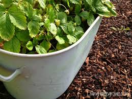 Container Gardening For Food - living homegrown