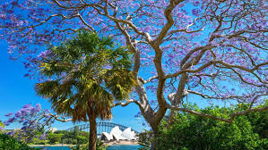 Botanical Garden Sydney by Australia U0027s Must See Botanic Gardens