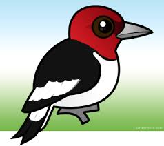 cartoon red headed woodpecker u003c meet birdorable