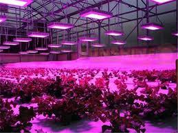 commercial led grow lights 300w led grow light plant growing light fixture plant light