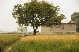 when trees are falling u2013 amrita serve