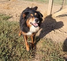 dogs from houston area animal shelters arrive in nebraska omaha