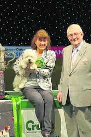 australian shepherd crufts 2015 48 best crufts champions images on pinterest afghans classic