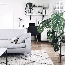 basic interior design microtrends monstera in the interior inspirations essential home