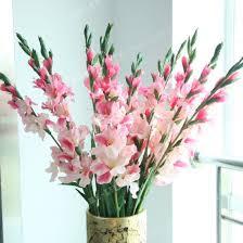 gladiolus flowers aliexpress buy 2 bulbstrue pink gladiolus bulbs beautiful