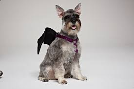 halloween safety for dogs dog grooming pet grooming in queens
