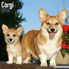 corgi corgi calendar 2018 pet prints inc