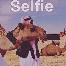 Camel Meme - selfie arab and camel v imgur