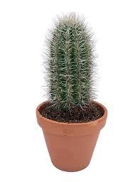 cactus florastore