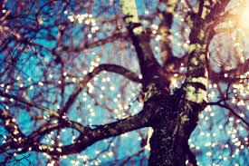 beautiful blue light sky tree image 170006 on favim