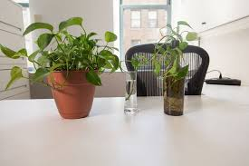 plant for office make a copy of this common office plant popular science