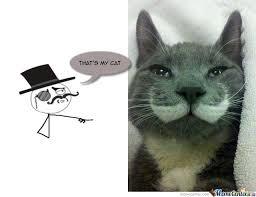 Sophisticated Cat Meme Generator - posh cat memes image memes at relatably com