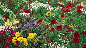 24 best native iowa plants images on pinterest native plants midwest wildflower seeds american meadows