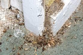 roaches overrun plain township family u0027s home news the