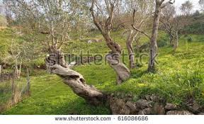strange tree stock images royalty free images vectors