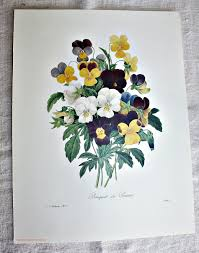Floral Prints by Botanical Floral Prints Set Of 2 Pansies Redoute