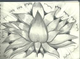 just a sketch of a lutos flower by flaviudraghis on deviantart