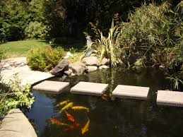 creative ponds and gardens