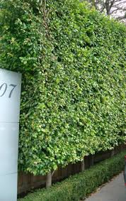 16 best garden boundary wall planting images on pinterest