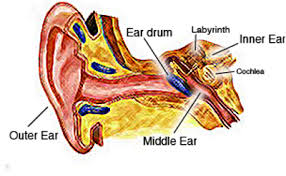 The Human Ear Anatomy Hearing Tests In Scottsdale And Mesa Az