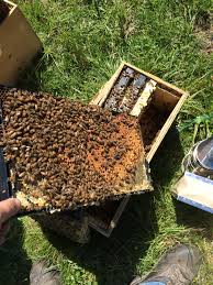nucs replacement hives for commercial and hobbyist beekeeping