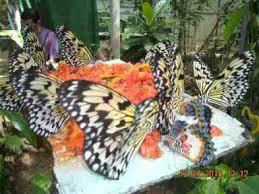 jumalon butterfly sanctuary mini museum and gallery cebu city