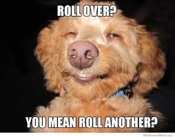 High Koala Meme - the 25 best 420 memes mtl blog