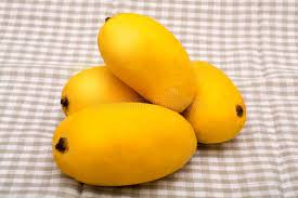 Mango King chaunsa mango a king of all fruits on tablecloth stock photo