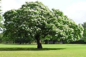 icteachers trees