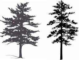 best 25 pine tree silhouette ideas on forest painting