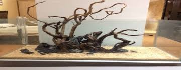 aquascaping layouts with stone and driftwood aquascaping blog latest posts aquascaping