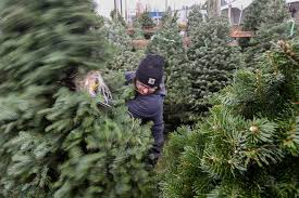 christmas tree prices christmas tree shopping season begins prices likely higher this