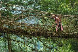 living root bridge u0026 khasi http www peteoxford com