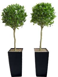 artificial bay tree by artificial landscapes notonthehighstreet