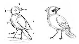 how to draw birds kid can doodle