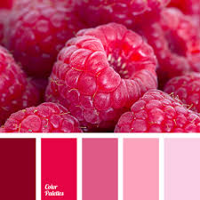 hot pink colour hot pink color palette ideas