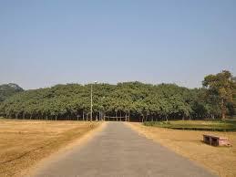 great banyan tree bigger than wal mart business insider