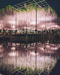 the 100 year old wisteria at japan u0027s ashikaga flower park is