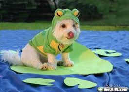 Halloween Costumes Dogs Cutest Puppy Costumes 2011 Dog Halloween Costume 6 Doggone Funny Ideas U2013 Dollar