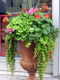 Summer Container Garden Ideas 80 Best Summer Planter Ideas Images On Pinterest Floral