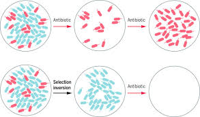 the race to reverse antibiotic resistance d brief