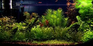 Tank Aquascape Understanding Dutch Aquascaping Style The Aquarium Guide