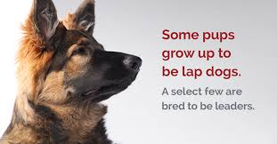 Leader Dogs For The Blind Jobs Home Fidelco Guide Dog Foundation Inc