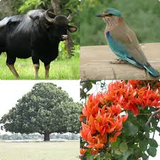 state animals birds trees and flowers of india dainik express