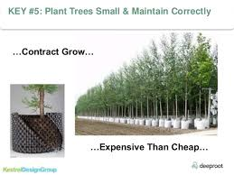 state of the science using trees for sotrmwater management