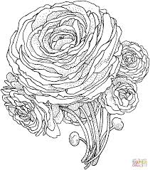 peony flower coloring page supercoloring com and