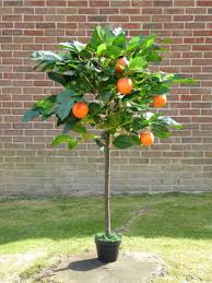 4ft artificial orange fruit tree plant in a pot artificial