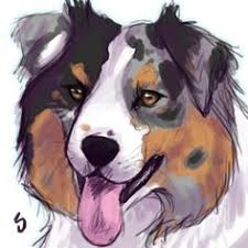 is an australian shepherd smart australian shepherd smart working dog australian shepherd