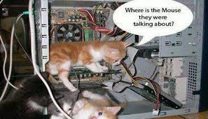 wallpaper cat whatsapp funny wallpaper for whatsapp free download1 otv