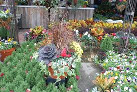 refresh your planters for the fall blogs fort leavenworth